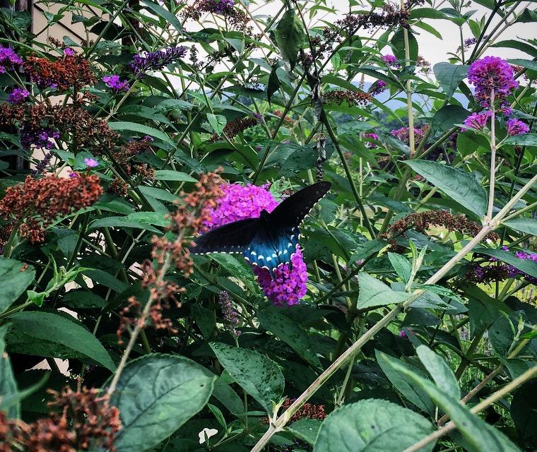 wisdom-butterfly-ar
