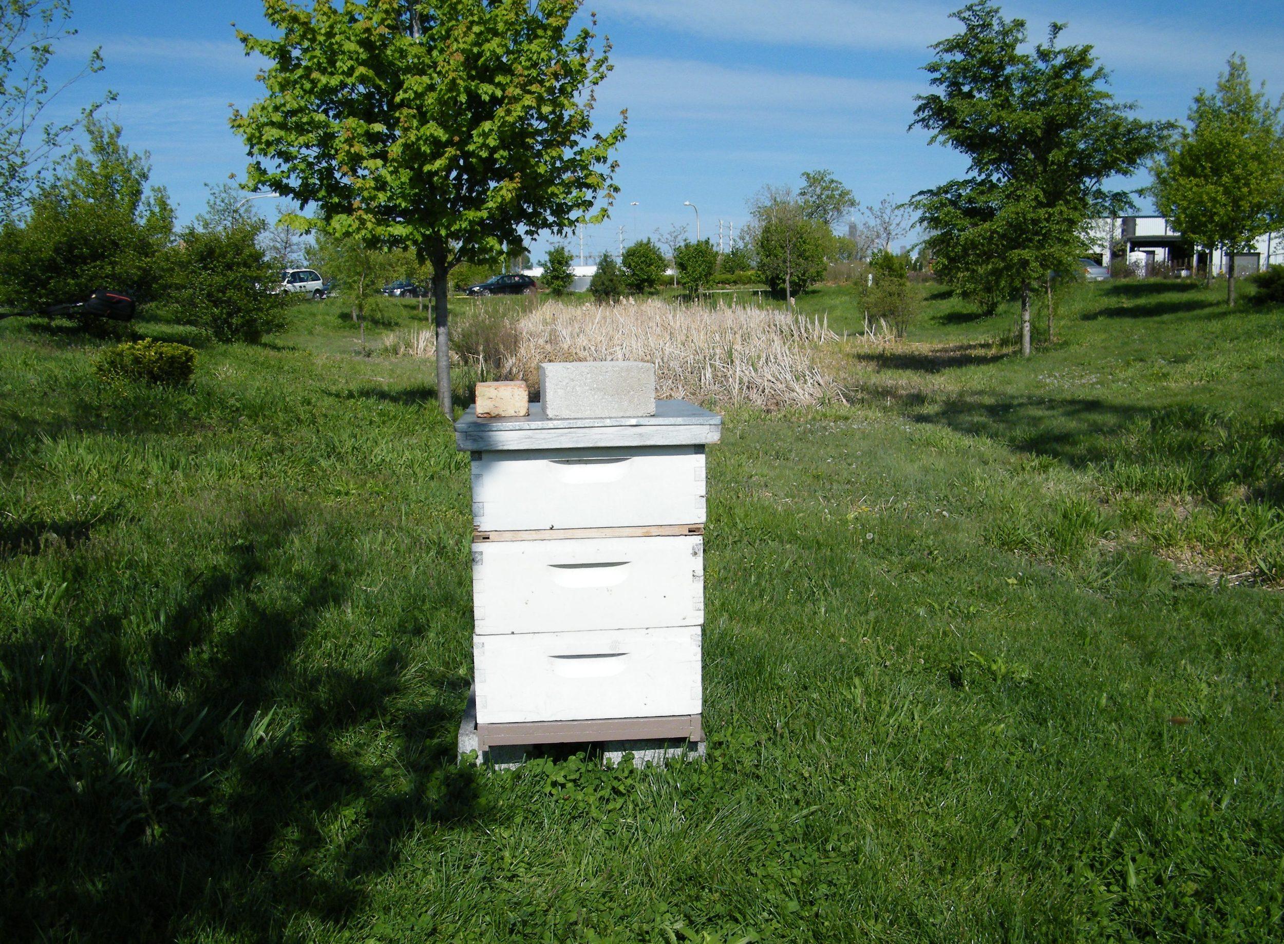 hive in sunlight.jpg