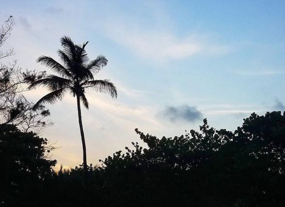 Palm-Tree-Skyline-Sunset