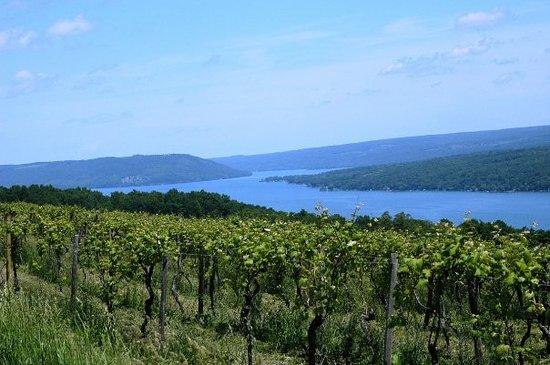 fingerlakes wine country.jpg