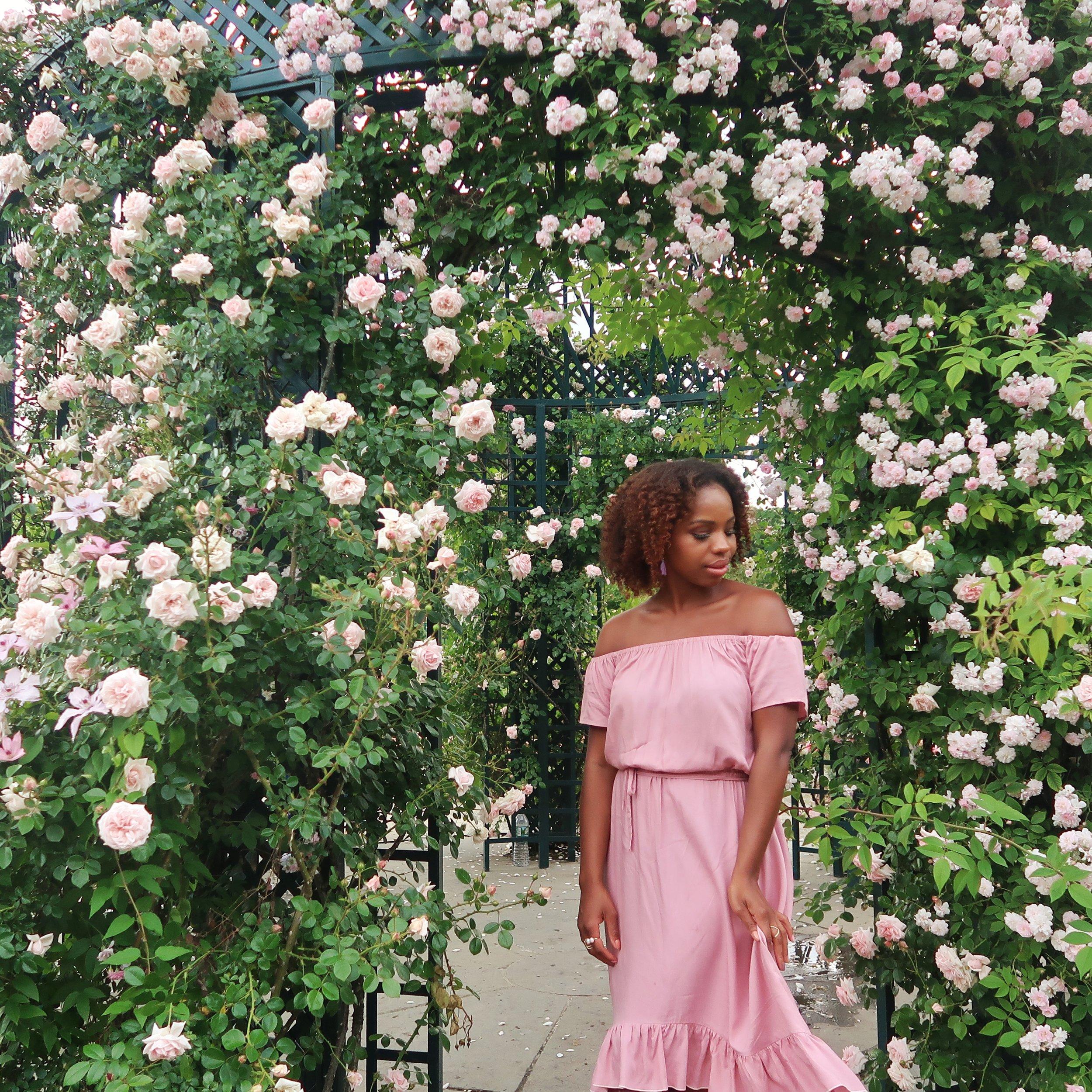 Summer Roses Full Bloom