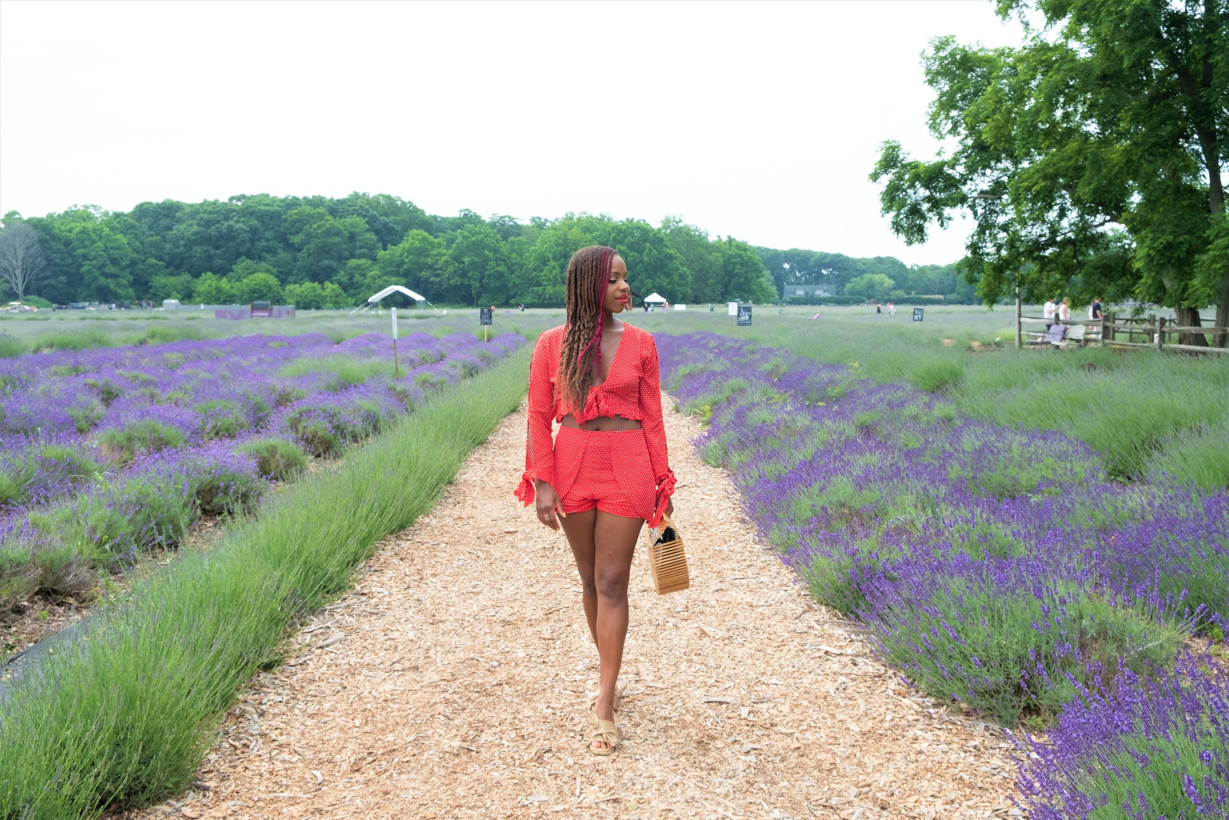 Lavender Field Day Trip