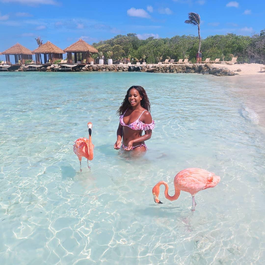 How to Visit Flamingos in Aruba.jpeg
