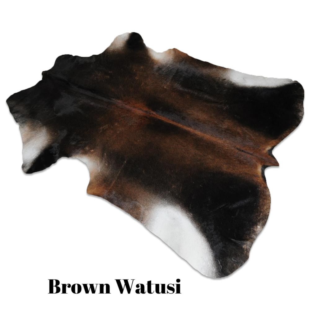 Brown Watusi.jpg