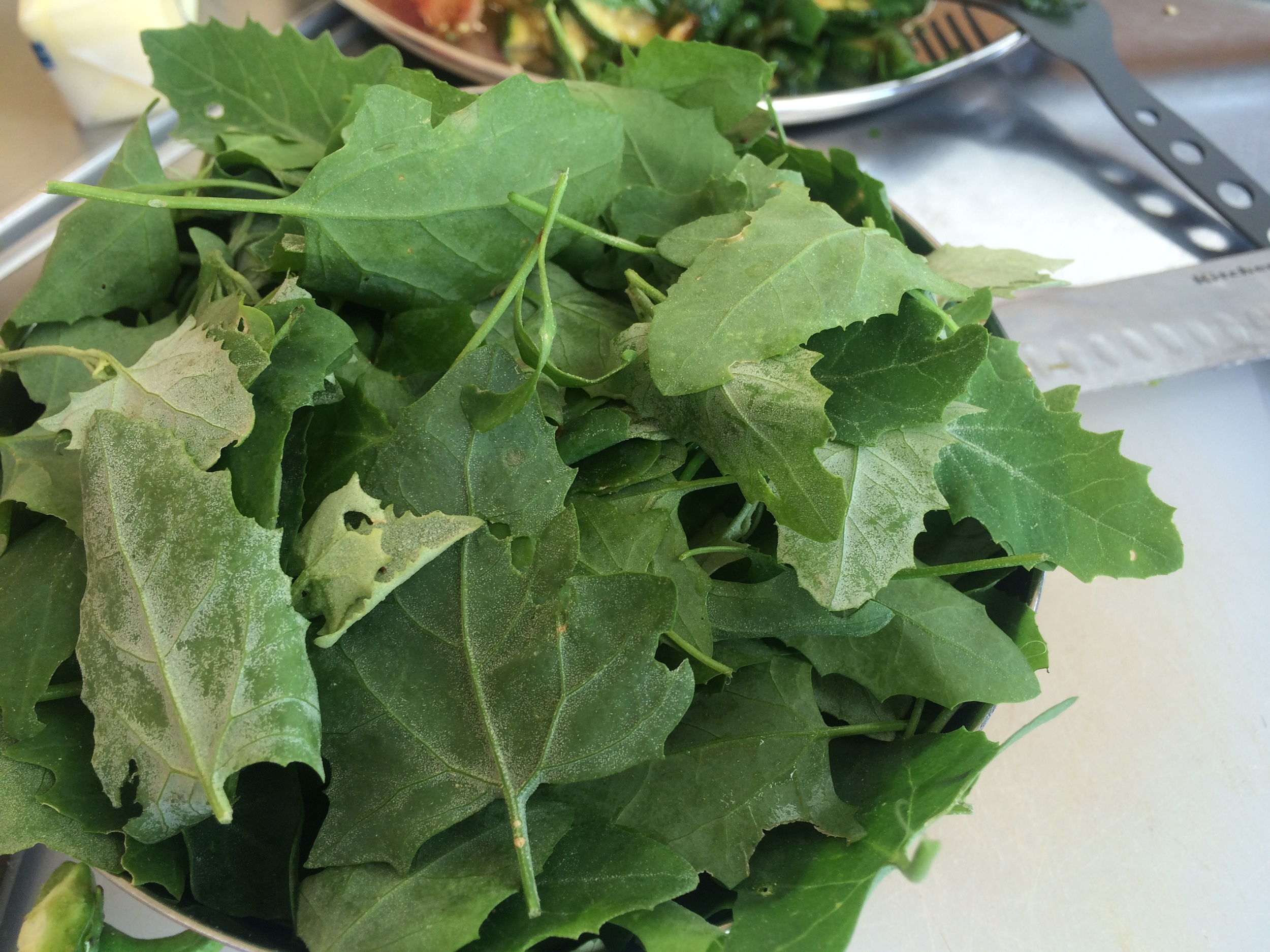 Fresh Picked Lambs Quarter