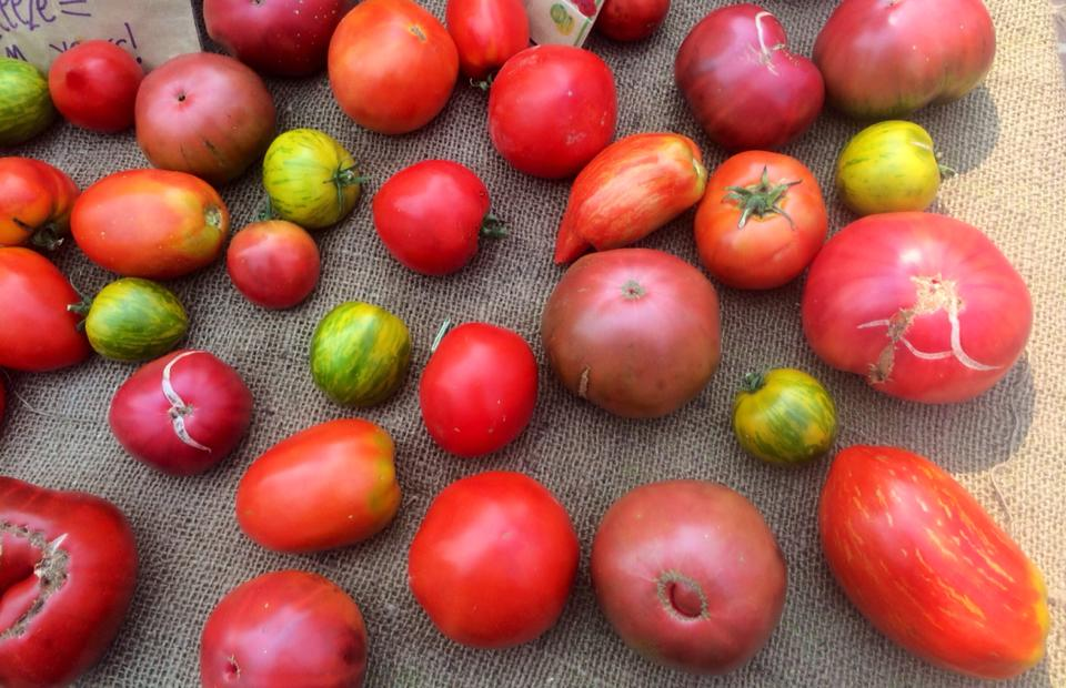 Don't you just love how tomatoes ( and humans ) come in all different shapes, colors, and sizes? - Cheers to summer 2017 and summer tomatoes!