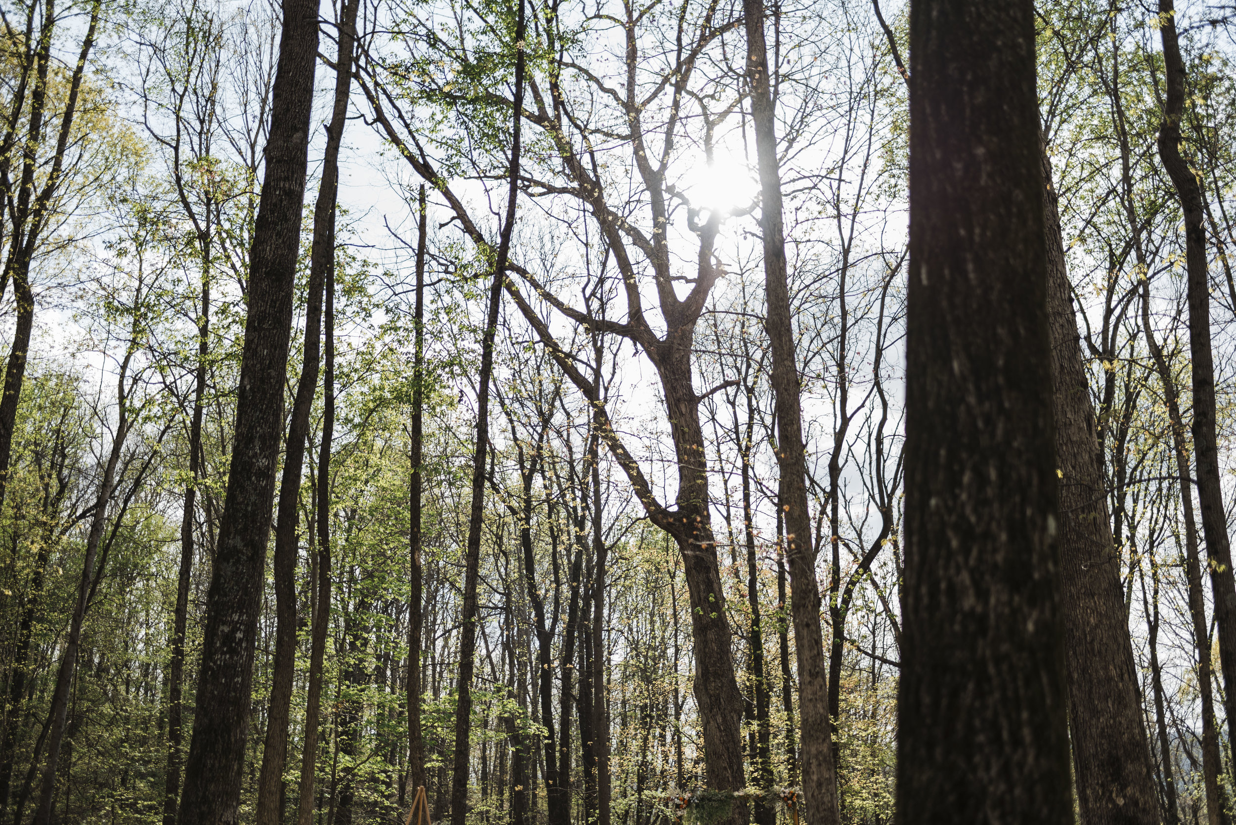wedding forest trees mountains Chattanooga Tennessee