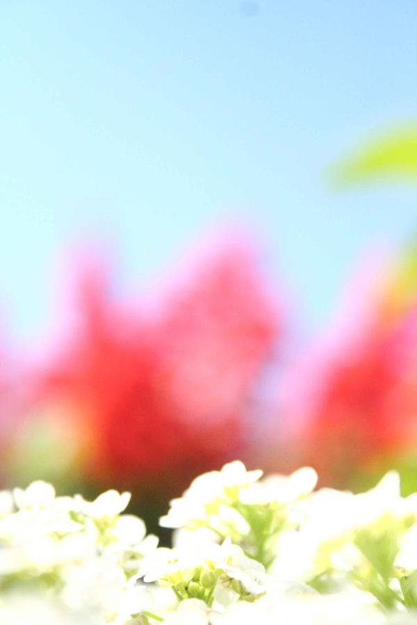 flowerblur.jpg