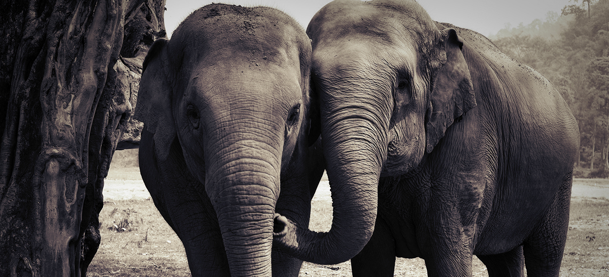ElephantBanner