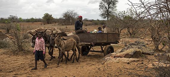 SPANA Zimbabwe Photography 2013