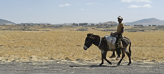SPANA in Ehiopia