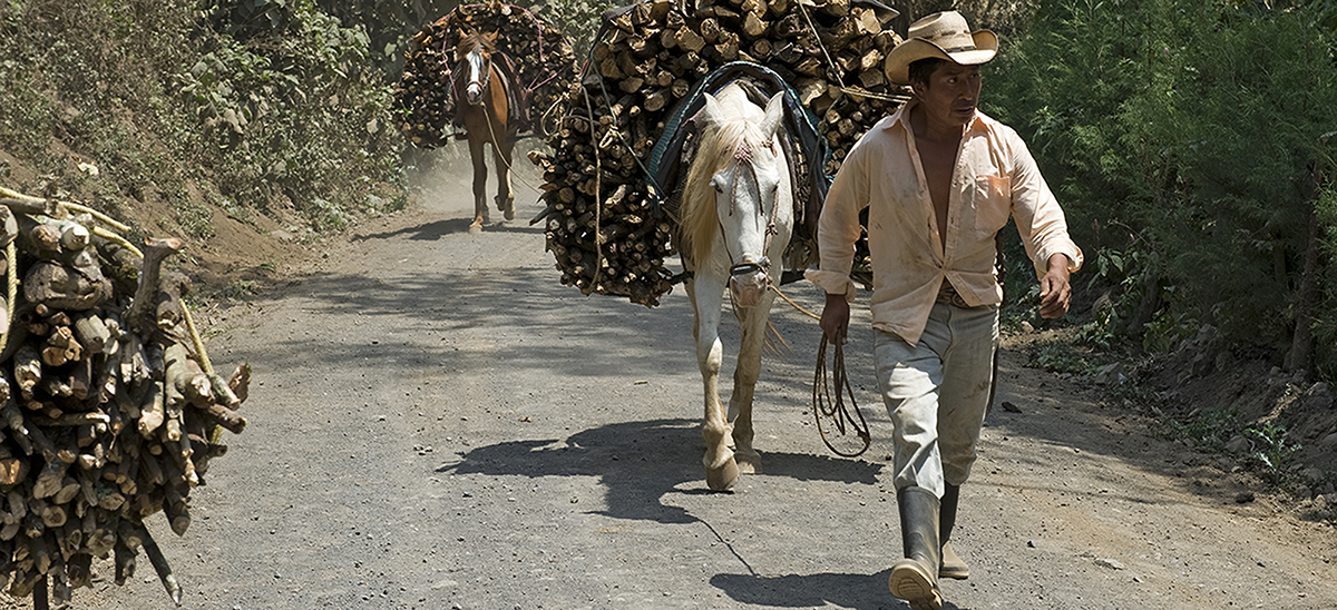 Guatemala Working Animals