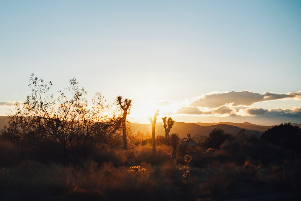 Joshua Tree, California at Dusk by Naomi Yamada