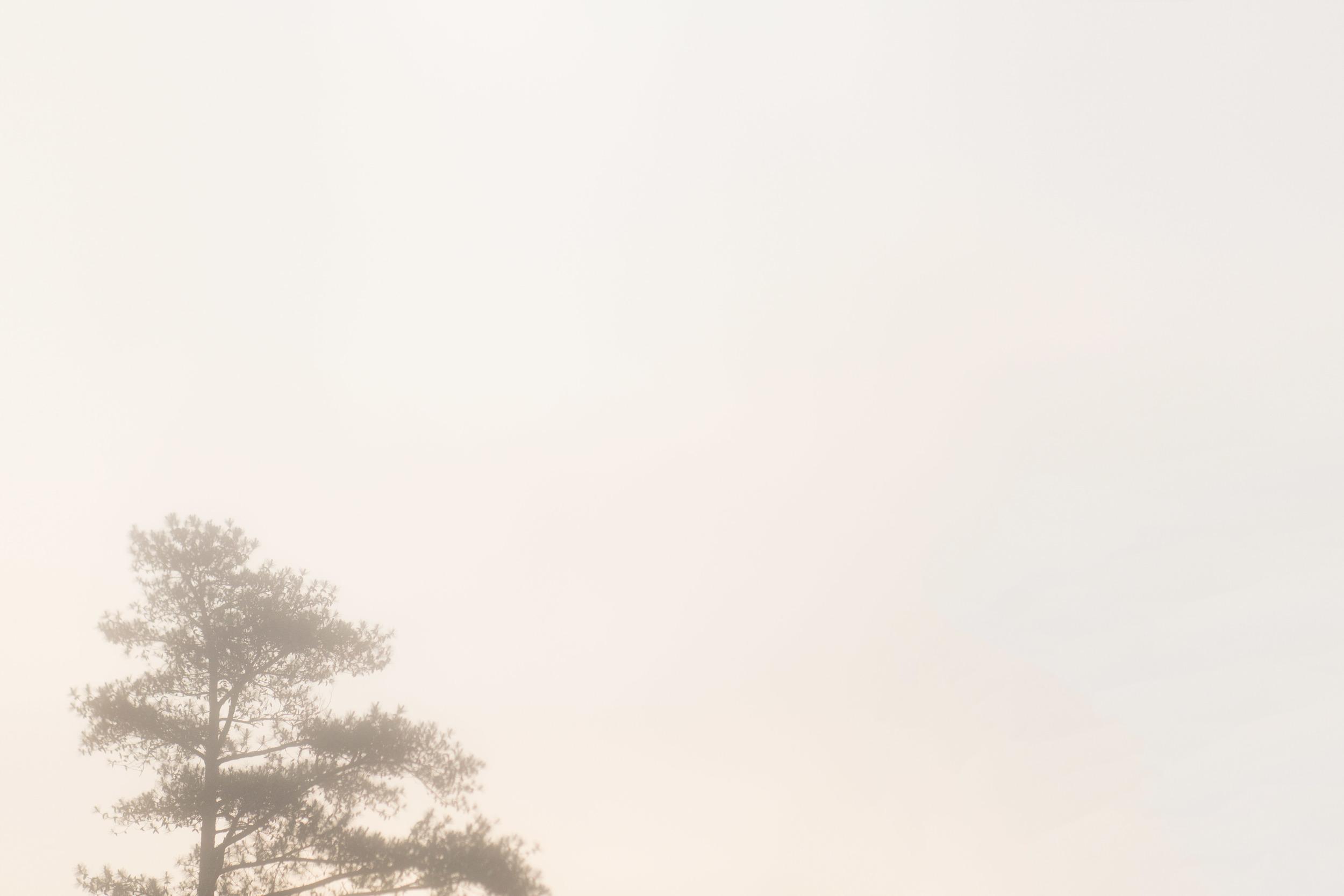 Foggy May Morning.