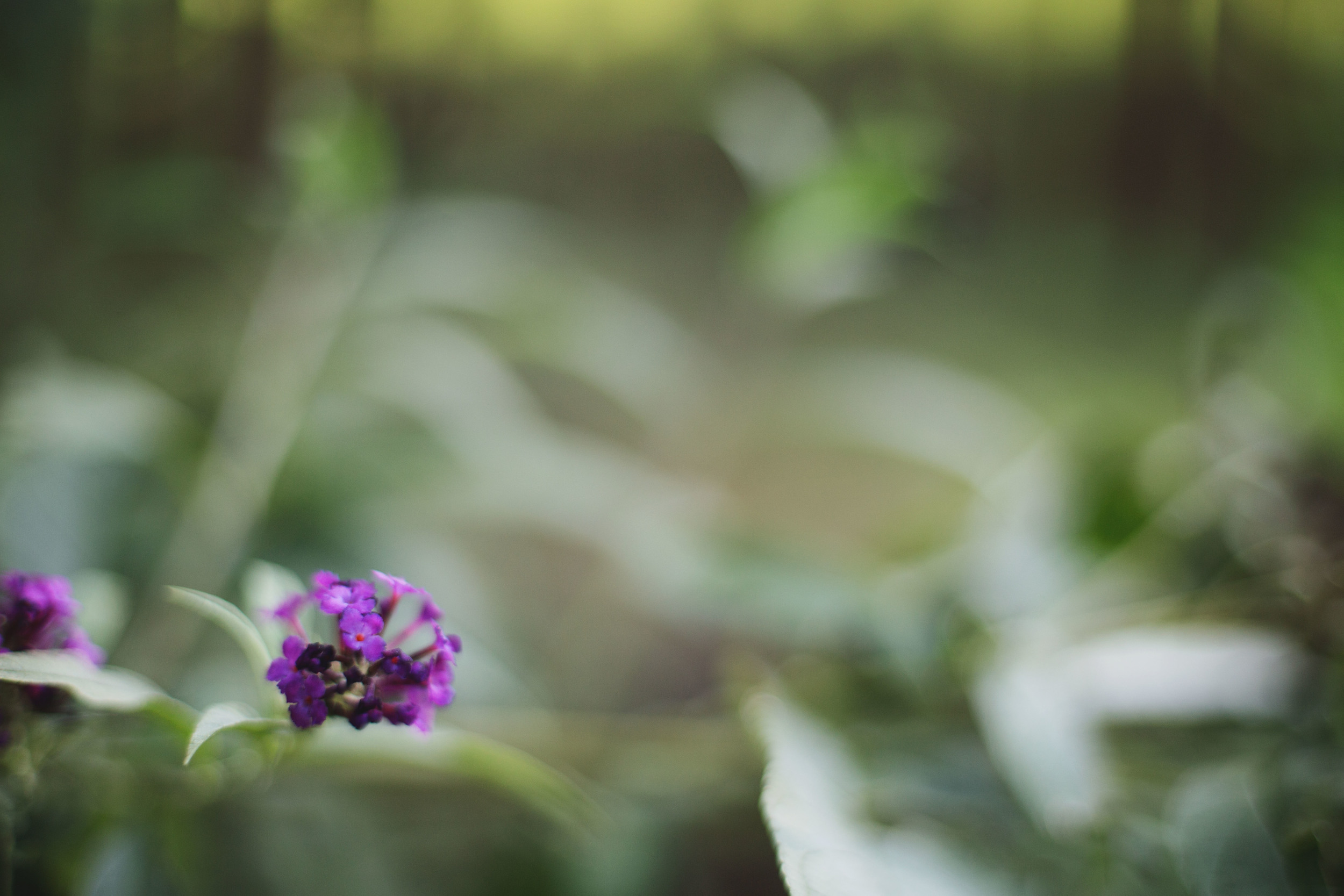 I finally tried freelensing and definitely see what the fuss is about! More experiments to come.