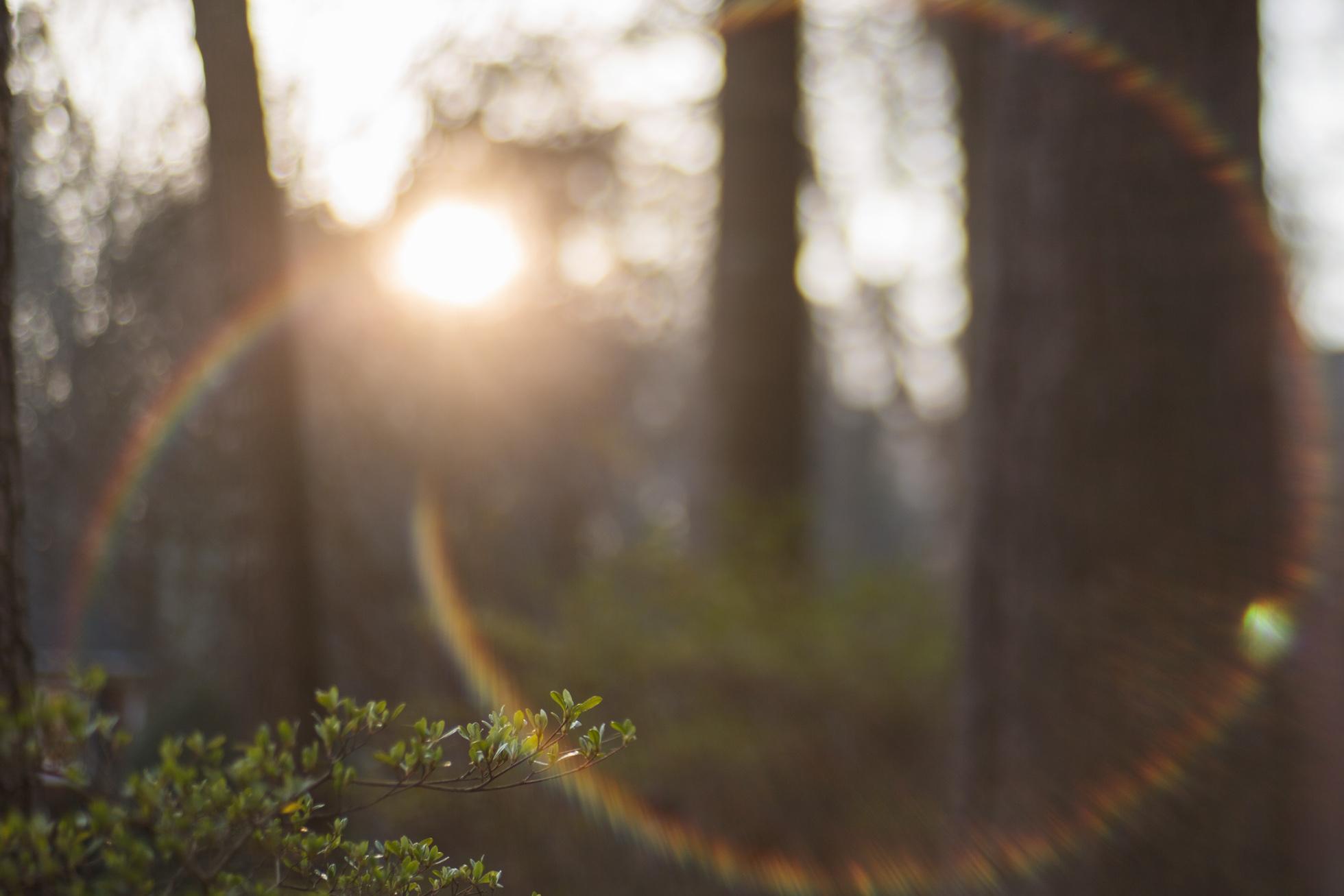 marietta_nature_photographer.jpg