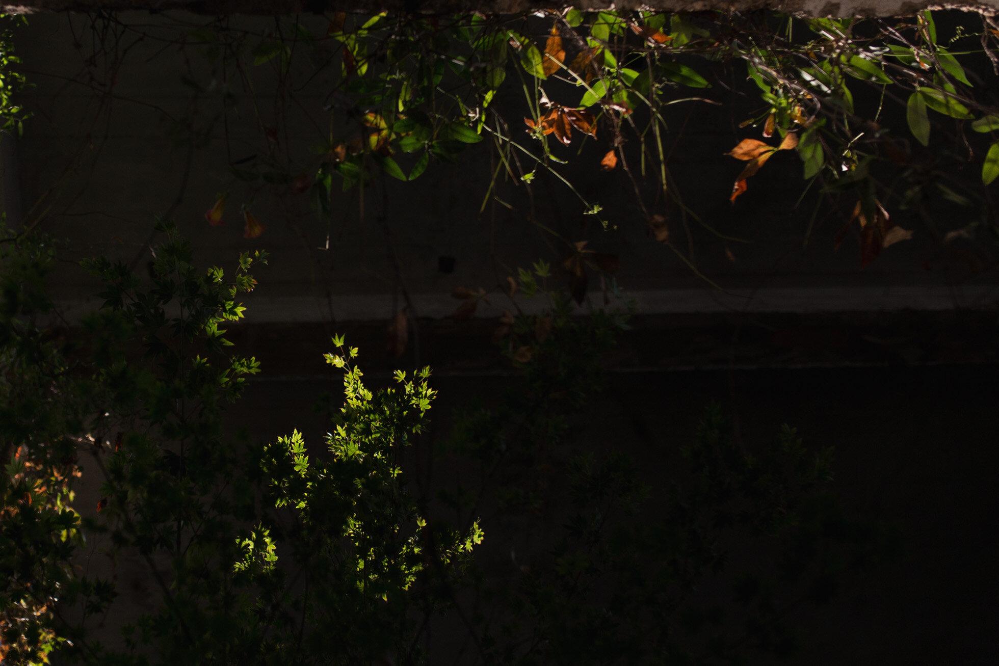 september13_leanne_hymes_photography.jpg