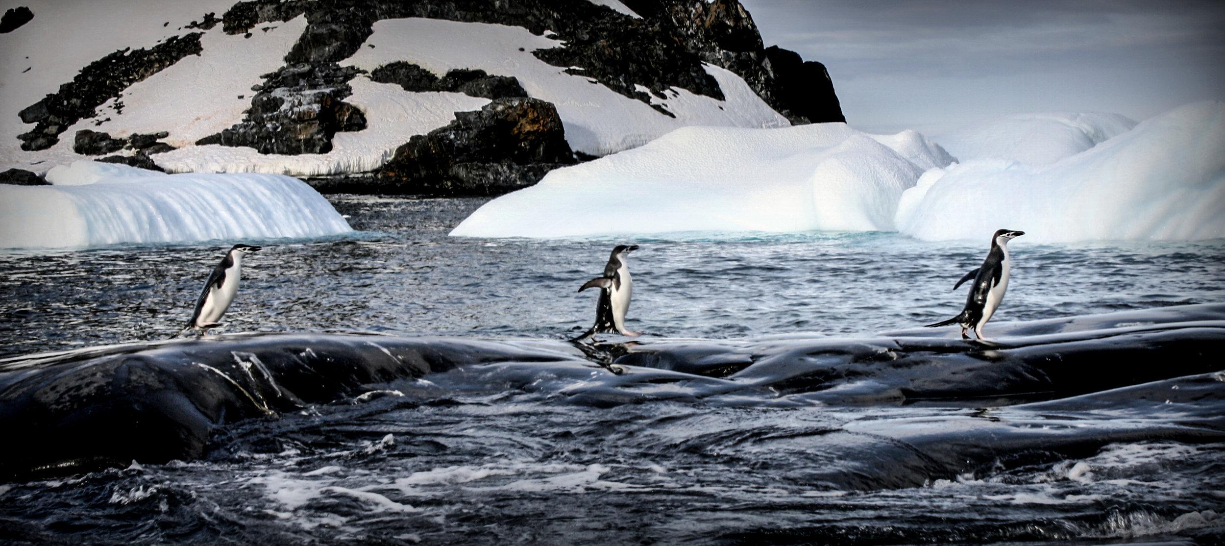 Hannah's Point, Antarctica
