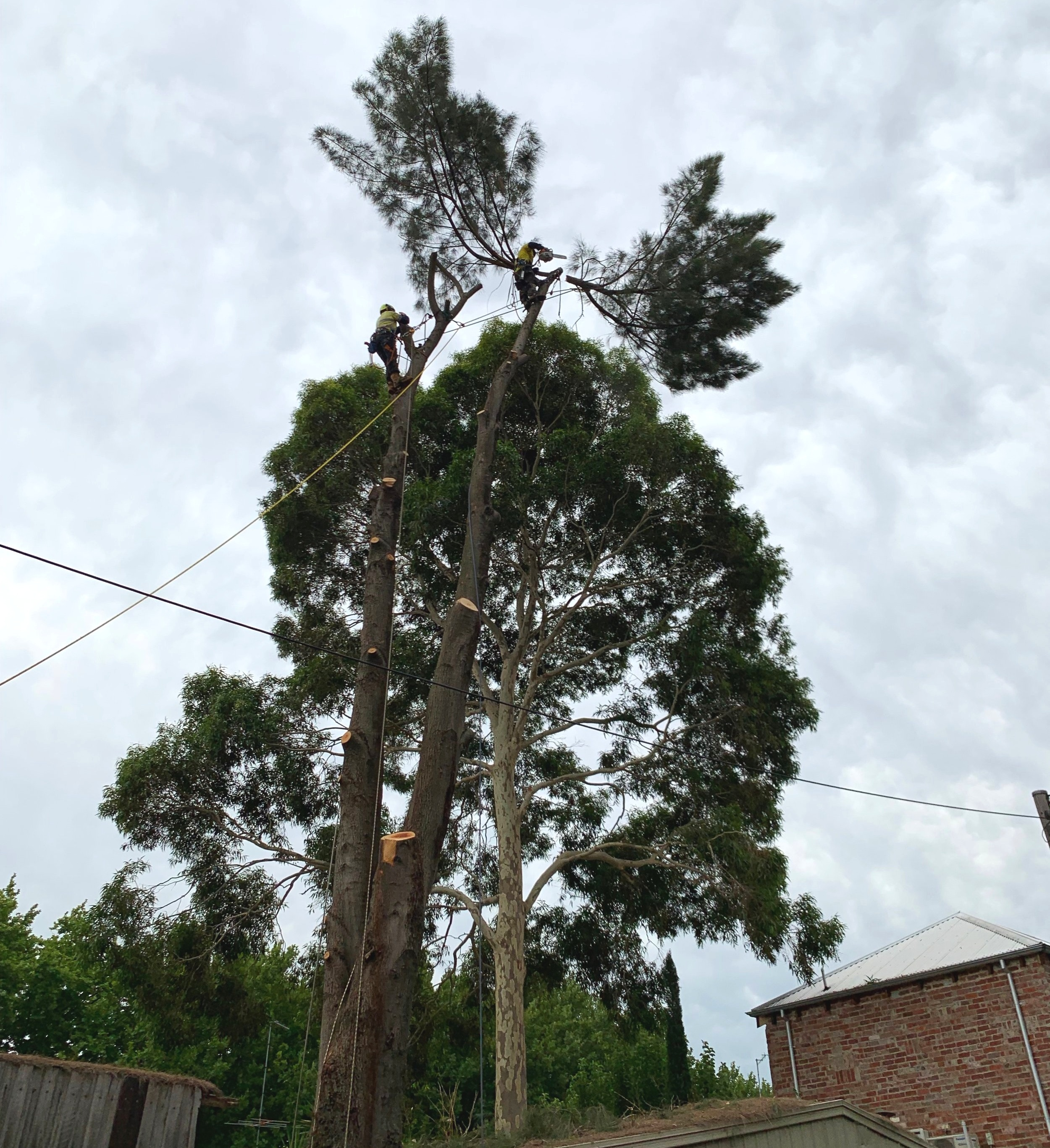 Prahran Tree Removal