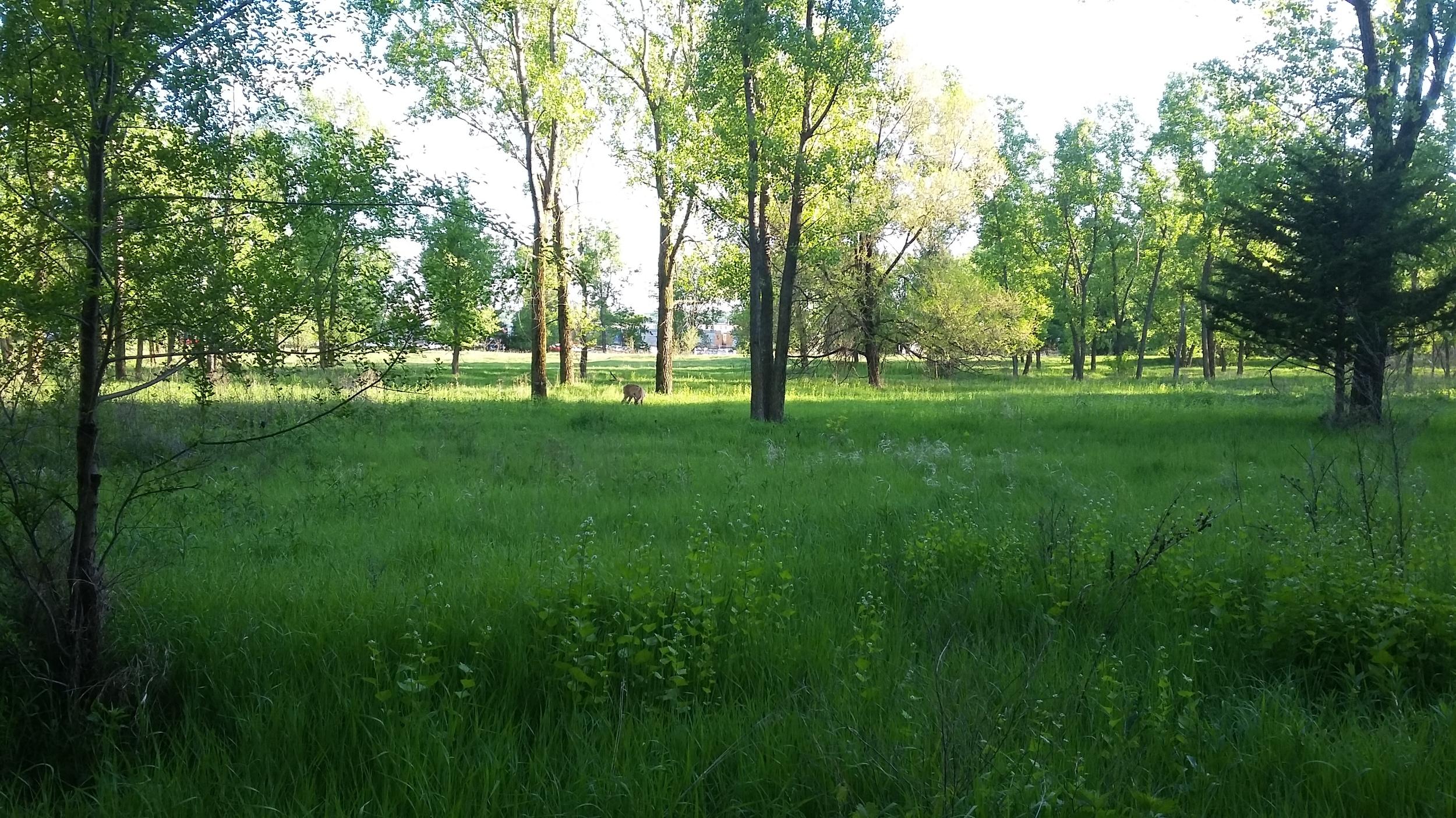 near Battle Creek, St. Paul, MN
