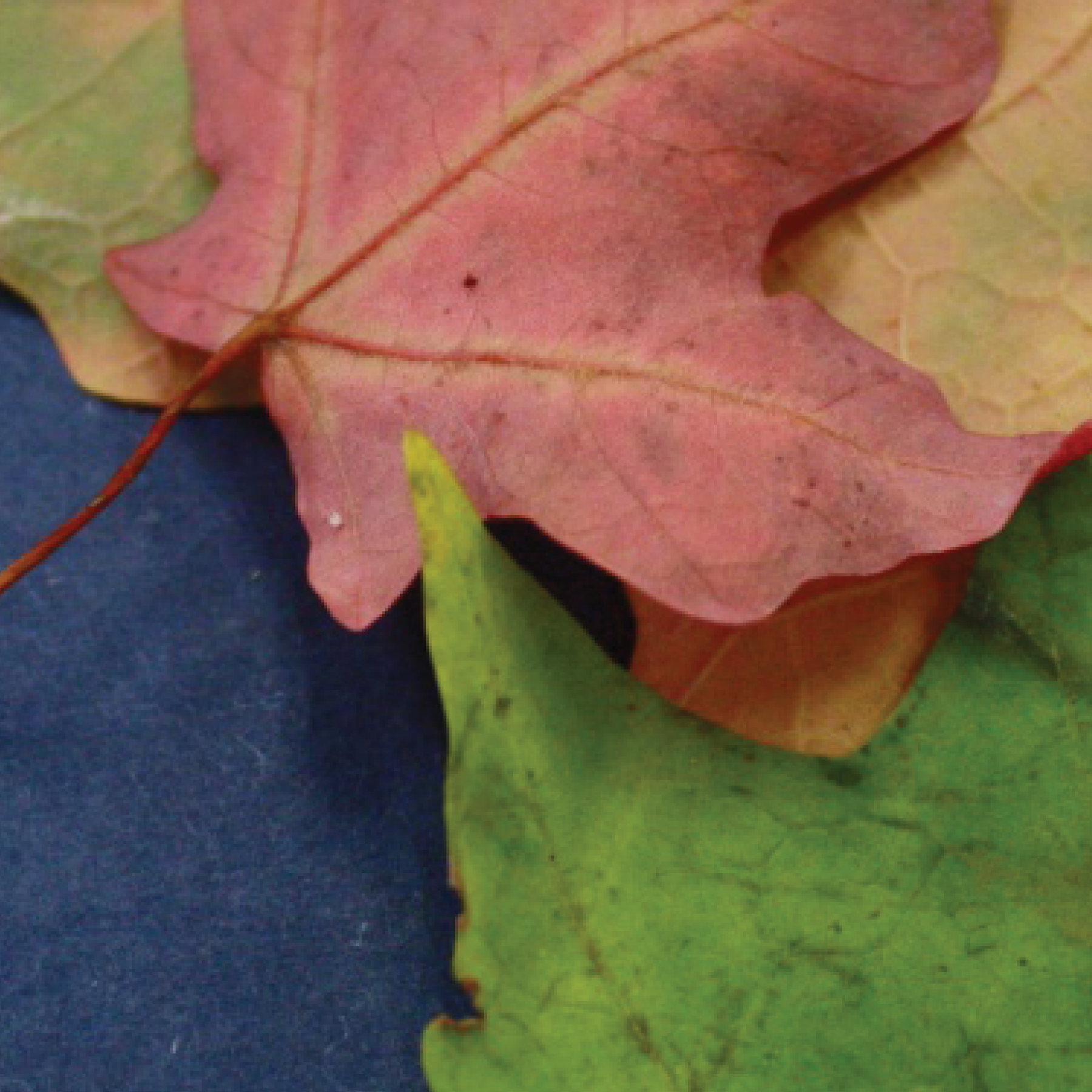 leaves11.png