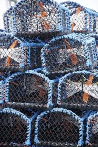crab-pot-1416869_640.jpg