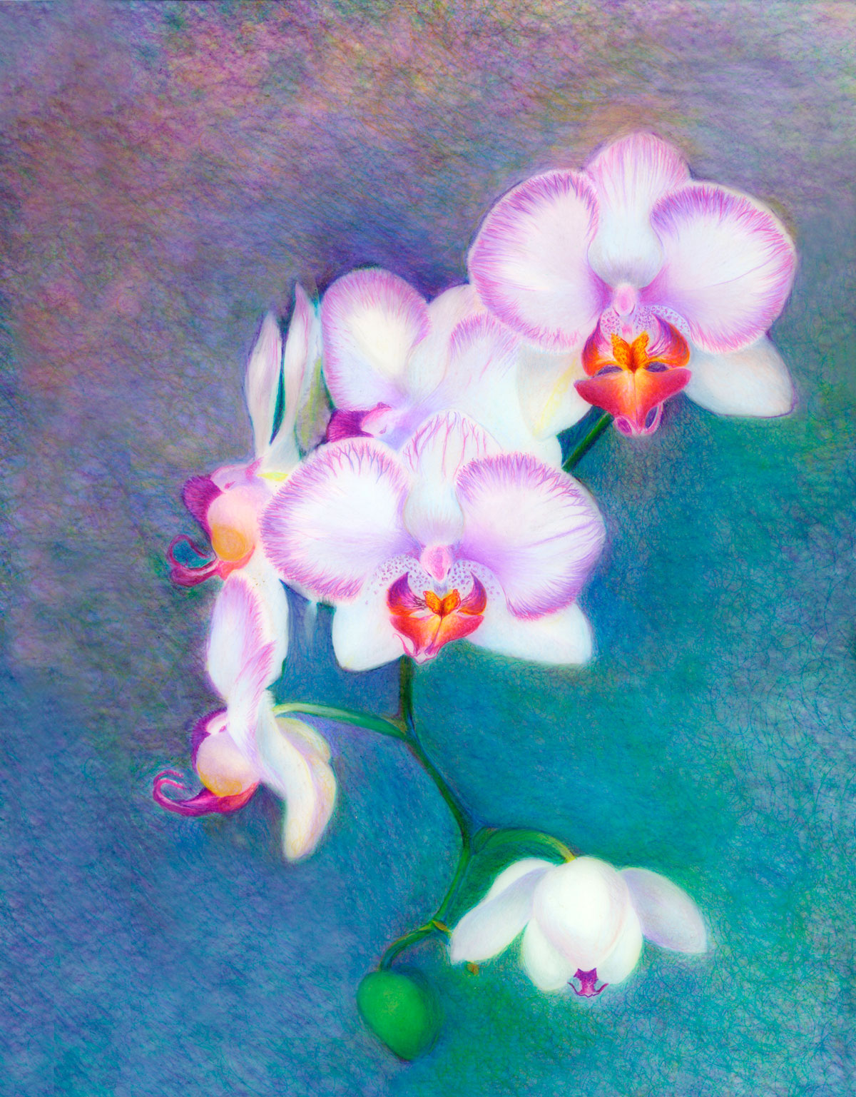 Orchid Magic