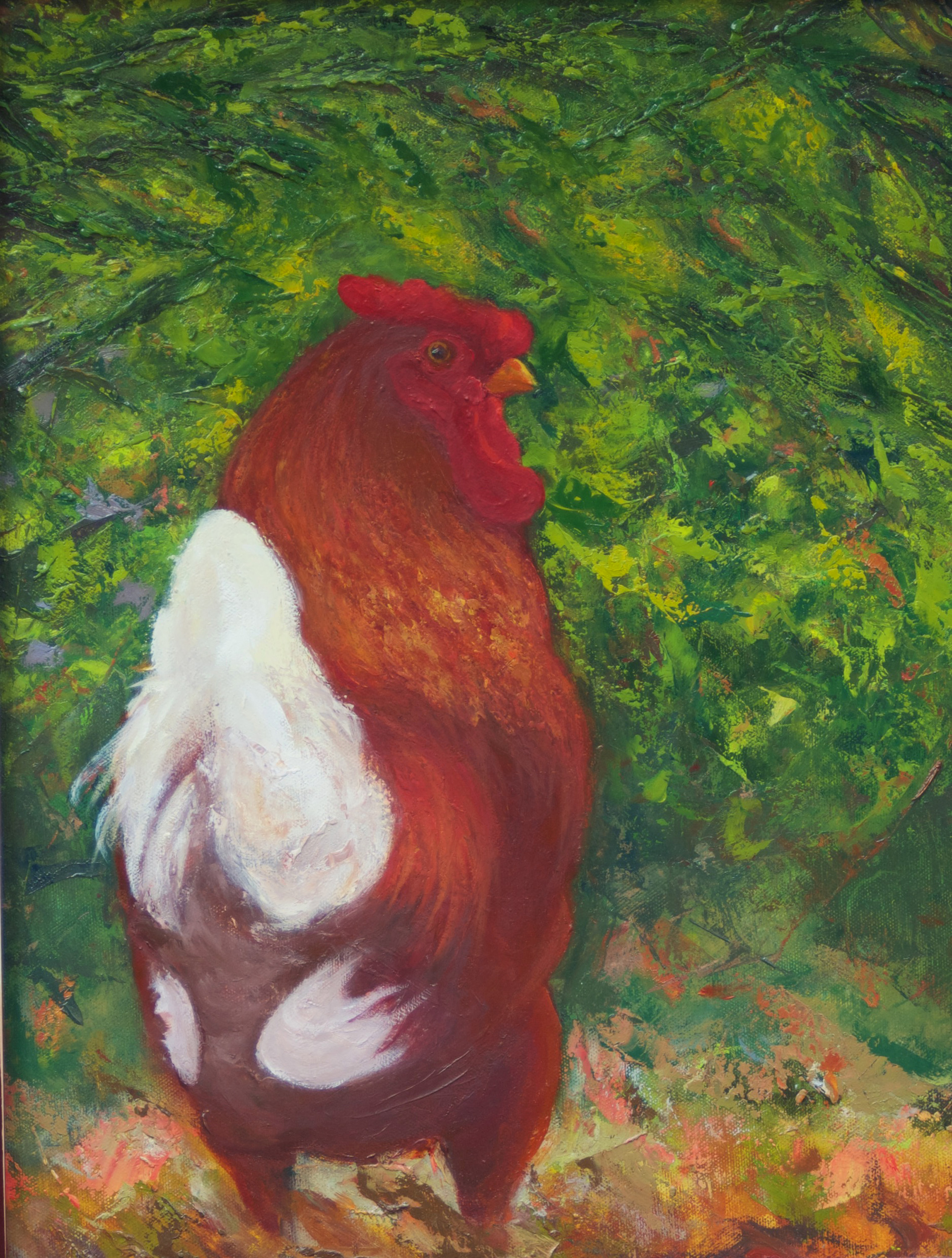 Mr. Peepers is an oil painting of a plucky rooster who lived across the street.  I love watching, drawing and painting him.