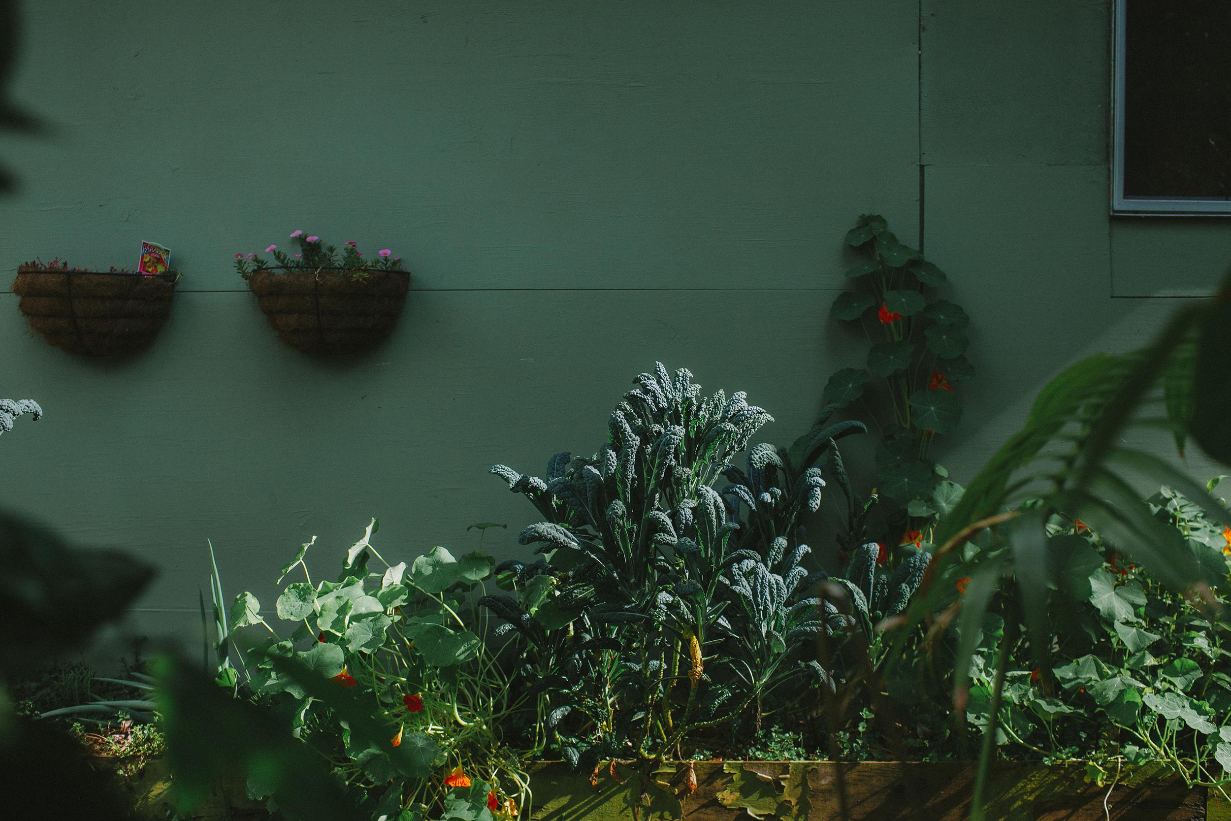 rainforest photos for print-4.jpg