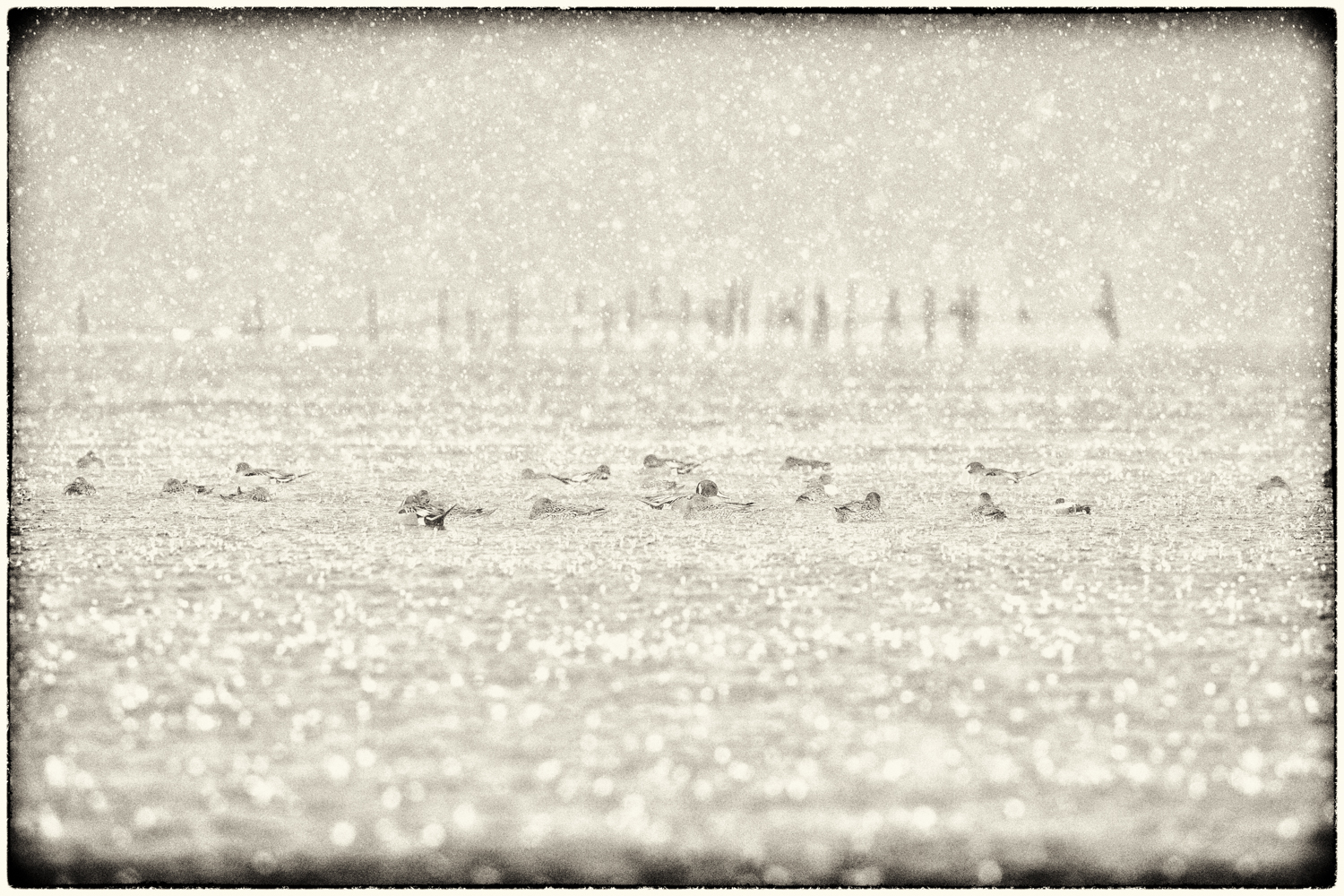 Waterfowl-06.jpg