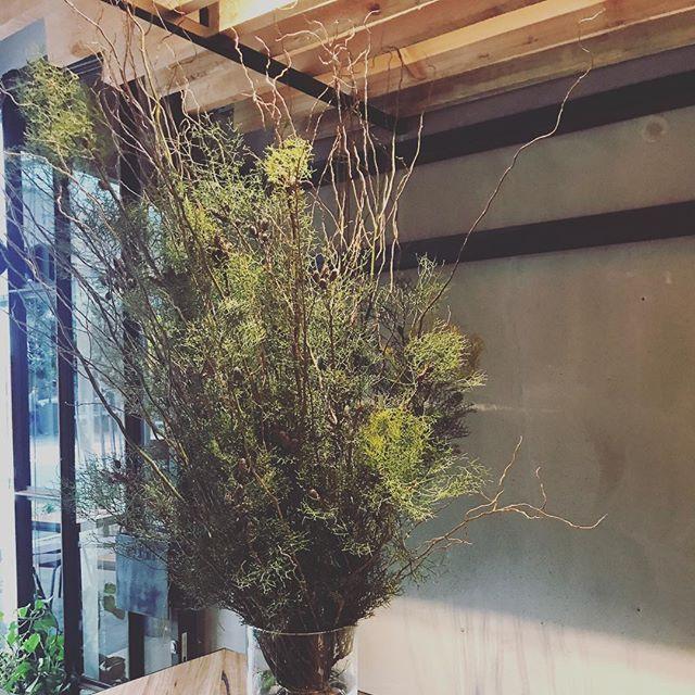 Nothing like fresh #conifers