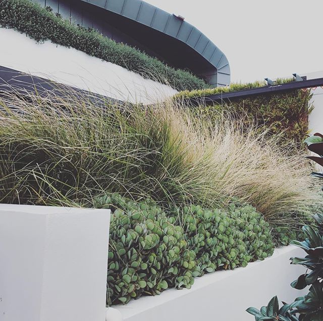 Spectacular mix of #grass #verticalwall #shape #texture #form #shape