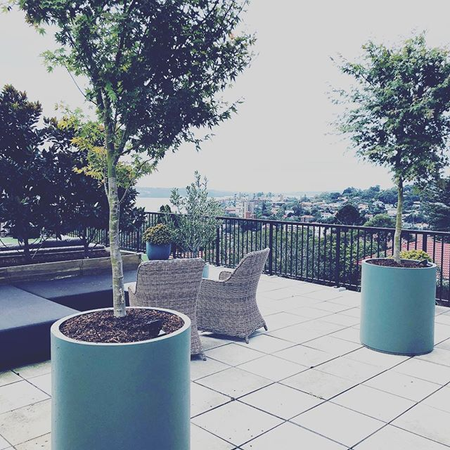 #penthouse #gardening #greenisin #landscape
