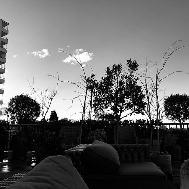 Sunset on rooftop garden in woollahra.