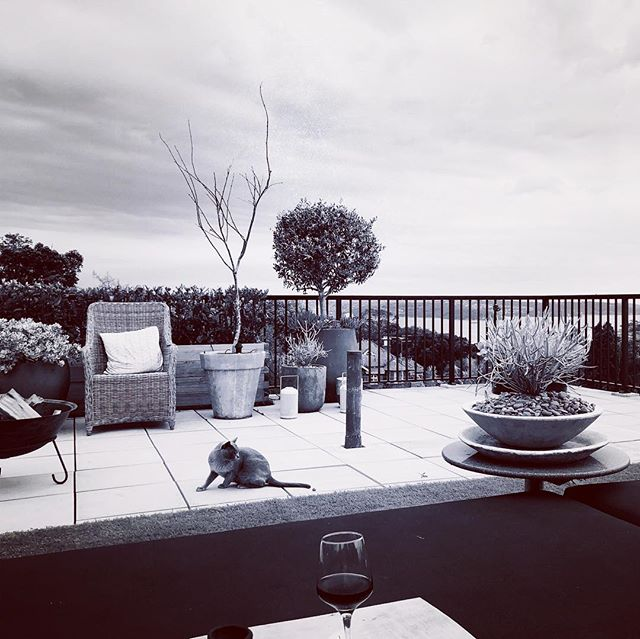 #rooftopgarden #rooftopgardens #wine #busyday #cat #sydneyharbour