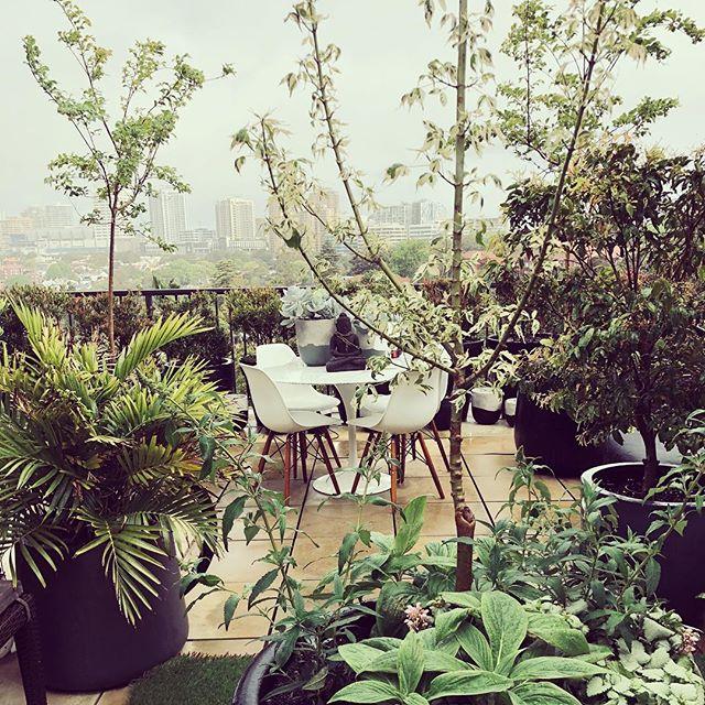 #rooftop #rooftopgarden #gardenlife #penthousegarden