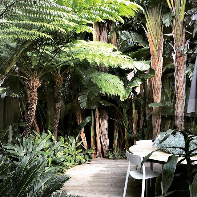 #treefern #smallgarden #gardendesign