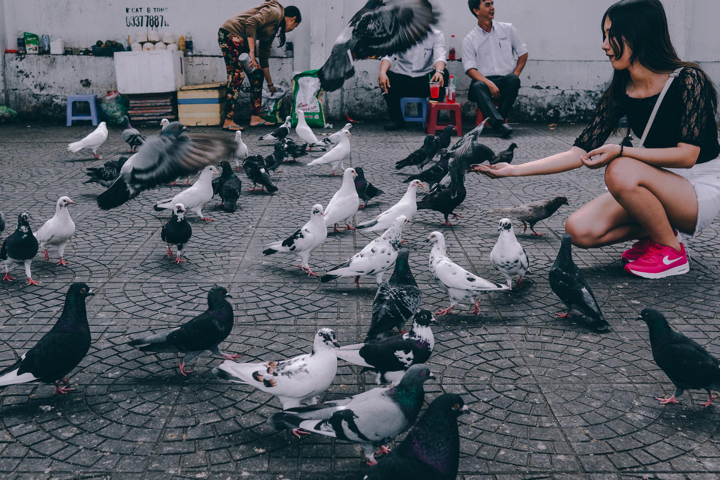 Pigeon feeding.