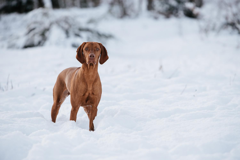 Winter snowfall in Worcestershire-15.jpg