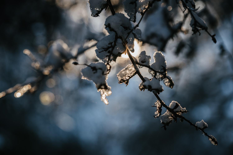 Winter snowfall in Worcestershire-1.jpg