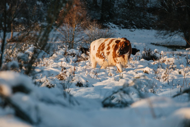Winter snowfall in Worcestershire-10.jpg