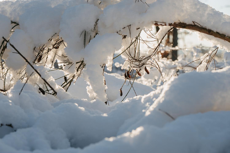 Winter snowfall in Worcestershire-5.jpg