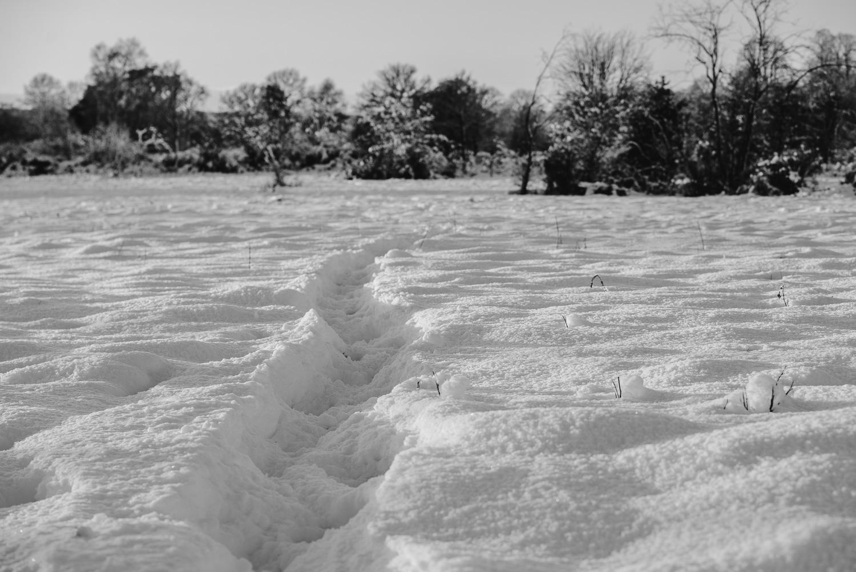 Winter snowfall in Worcestershire-8.jpg