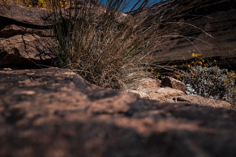 Las Vegas Photography-20-2.jpg