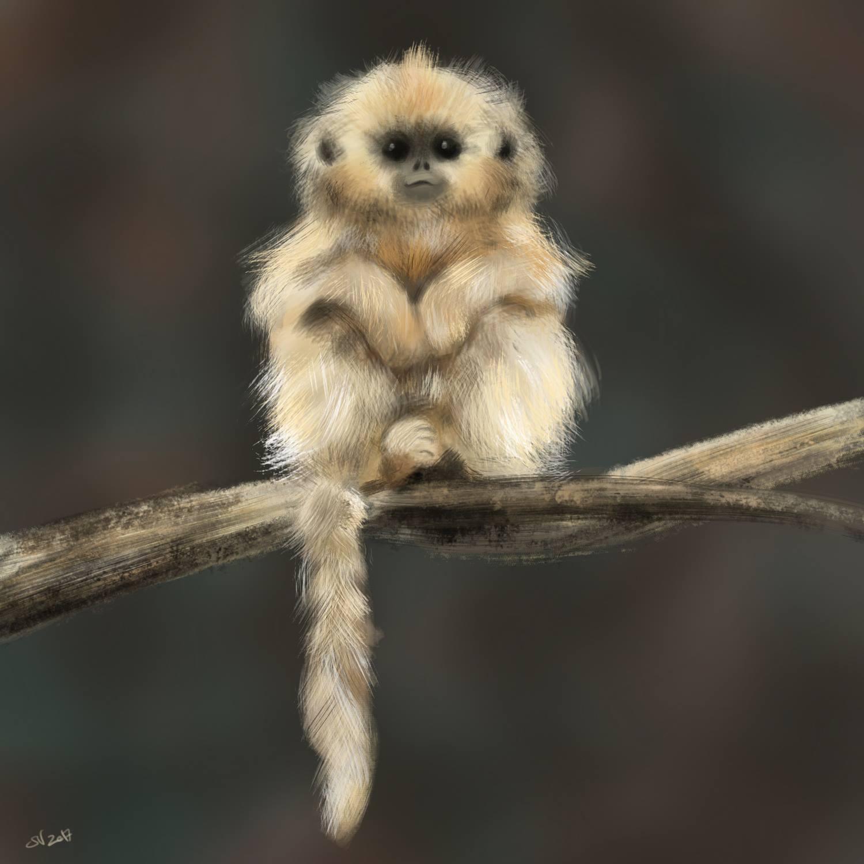 113_Monkey.jpg