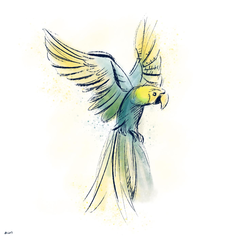 35_parrot.jpg
