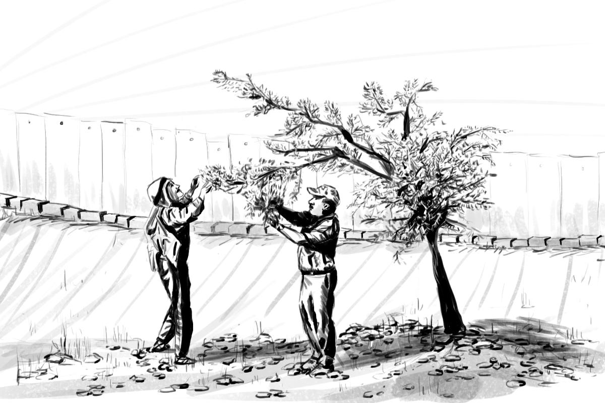 Palestine_Illustration_SeasonalCheckpoint.jpg