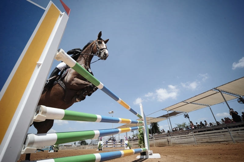 sports-horse-purchasing.jpg