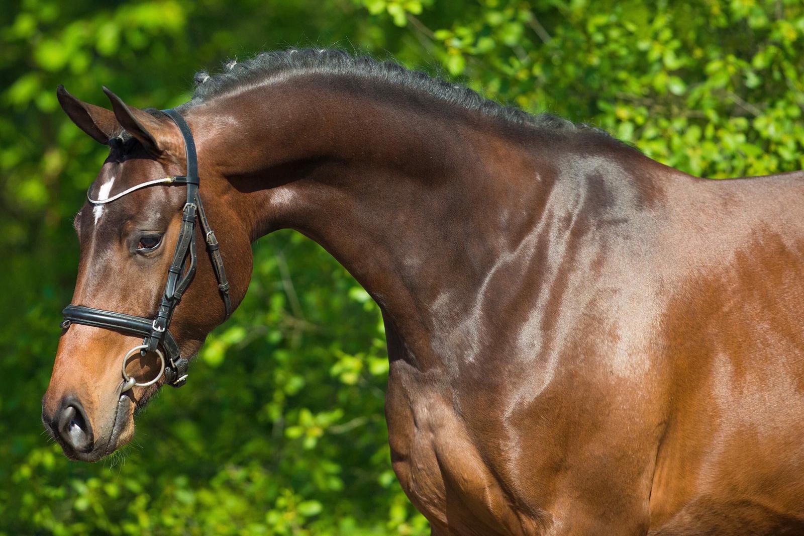 international-sport-horses-dressage.jpg