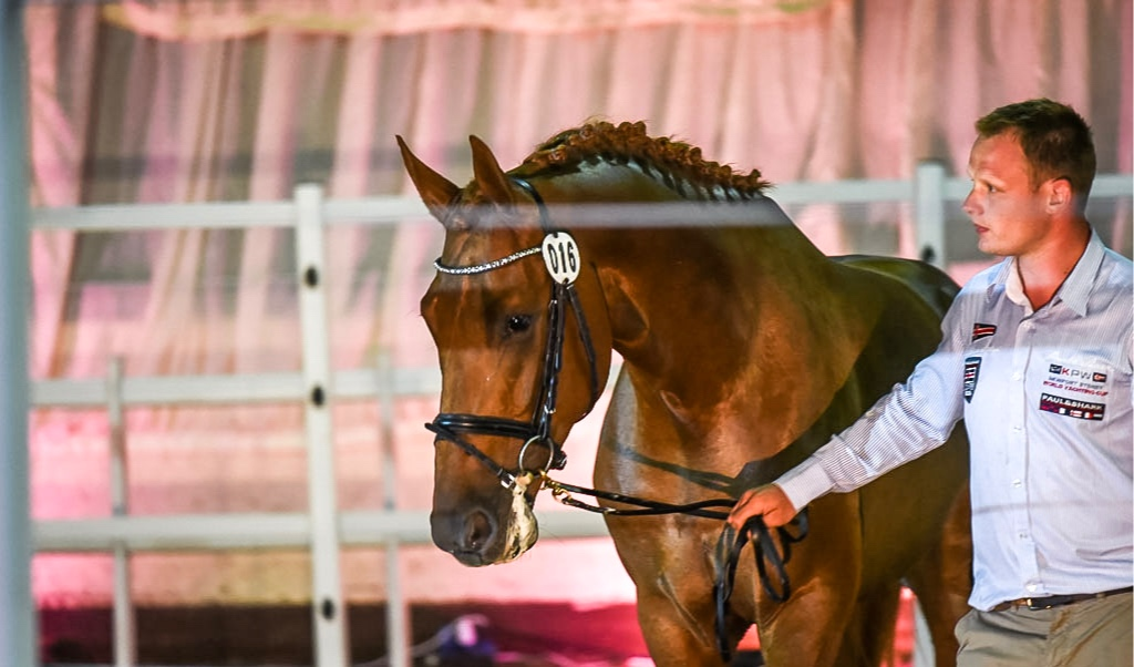 horse-auction.jpg